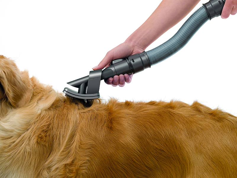Brosse DYSON Animaux Groom